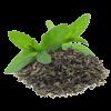 Aromatická visačka s vůní zeleného čaej